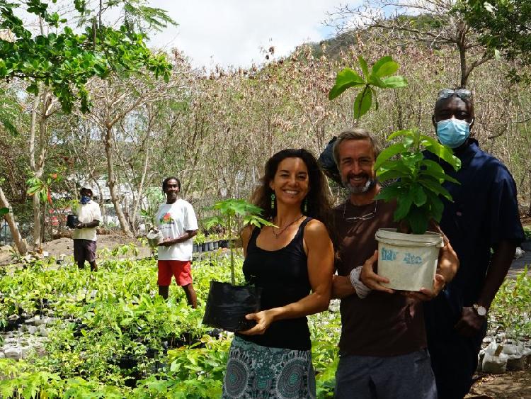 Carribean Hotel's Tree Planting Crusade